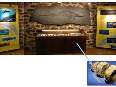 Presentació de la sala d'exposicions